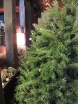 christmas tree 2012 001-small